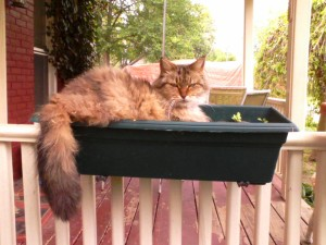 Tesla in the window box.