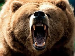 Be a Mama Bear.