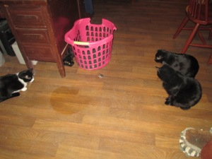 The cats surrounding the mouse, which is in front of the laundry basket.