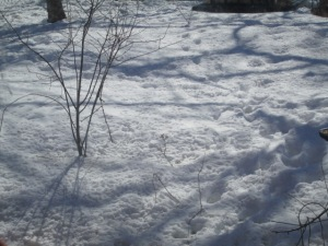"Thousands of tiny bird ""footprints"" in the snow."""