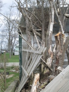 This is part of the dead tree and crushed fence.