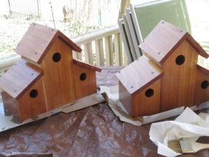 Putting varnish on my bird houses.