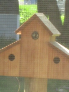 A new sparrow family moving in.