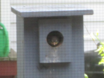 Baby Sparrow peeking out