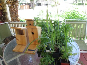 Three birdhouses and two flats of plants.