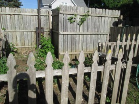 My strawberry patch. The herb garden is on the other side of the tall fence.
