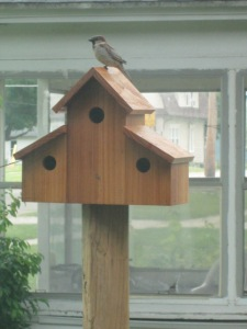 "The Sparrow singing, ""This house is now MY house."""