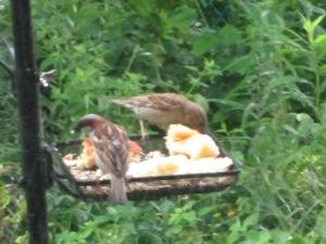 Birds enjoying our Challah Bread.