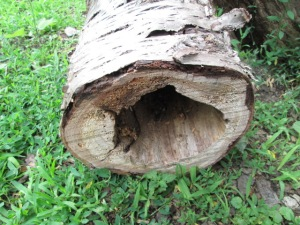 One of the hollow logs