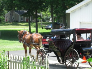 Horse & Buggy rides