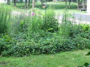 Neat Lawn, Wild Garden