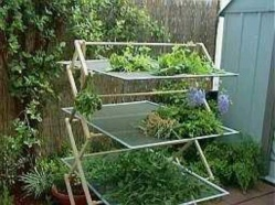 A rack to air dry herbs rather than hanging them