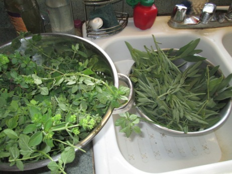 Bowls of oregano and sage