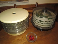Oregano and sage drying in the dehydrators and tiny hot peppers in the bowl.