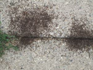 Swarming ants