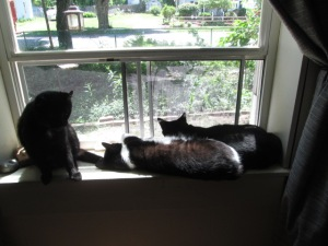 From left to right, Luke, Timmy, and Little Bear in the window.