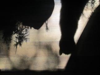 Interesting shadow