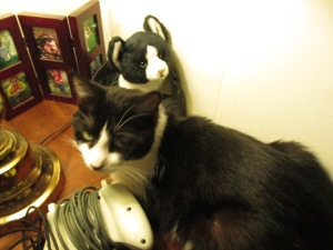 "Timmy and his toy ""twin."""