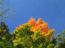 A splash of autumn color