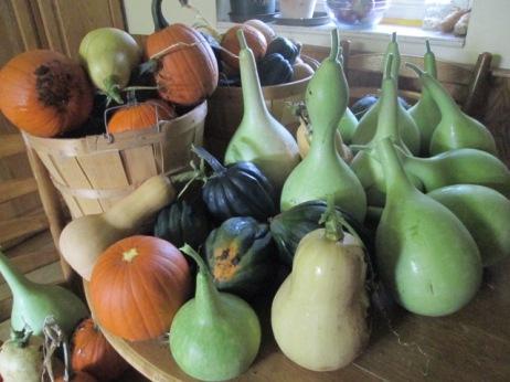 Pumpkins, squash, and gourds