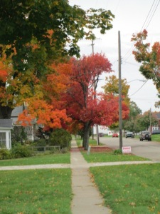 Those beautiful trees are in front of our house.