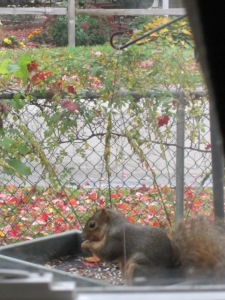 The squirrel in the feeder