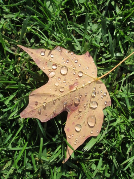 A dew-dropped leaf