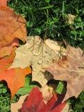 Pretty autumn leaves