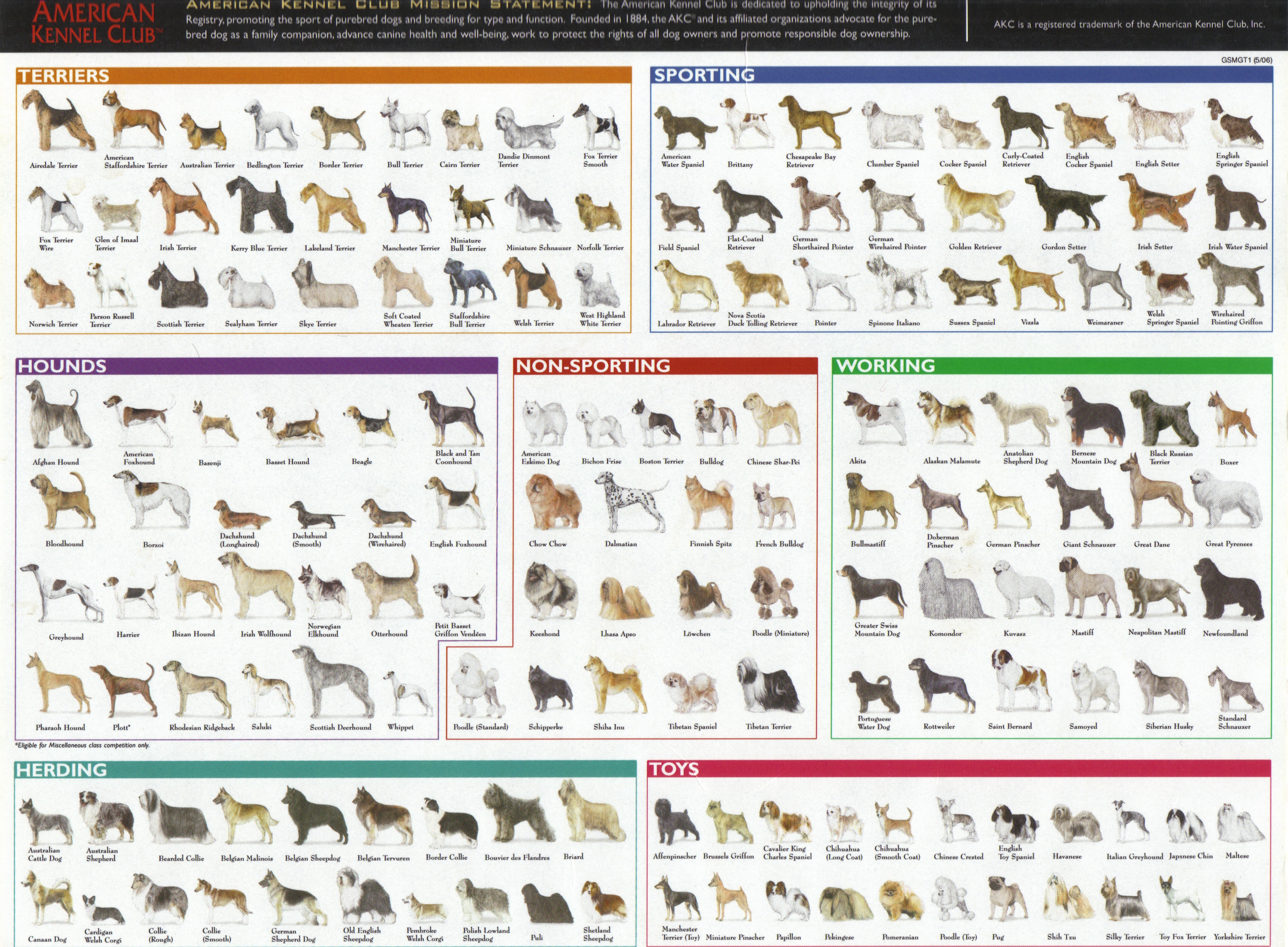 Species and Breeds | I...