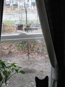 Little Bear watching squirrels