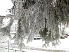 January 14, 2015 Frozen Fog 017