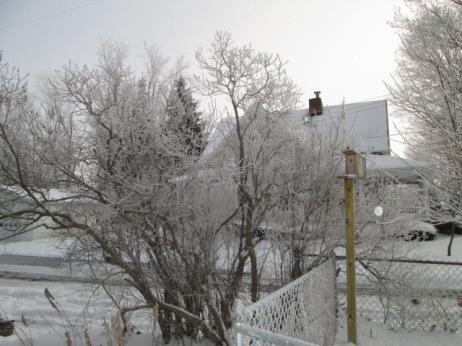 January 14, 2015 Frozen Fog 020