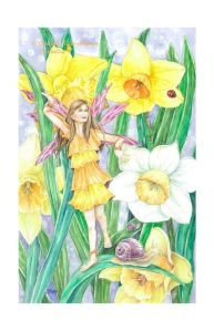 Fairy Daffodil