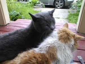 Annie and Rikki-Tikki-Tabby sitting on my lap while I scraped old paint.