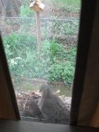 Baby Birds 009