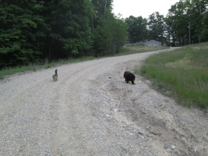 Tesla and Danny following me down the driveway