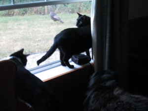 Little Bear, Timmy, and Danny interested in the turkeys outside the window.