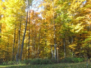 Our Golden Forest