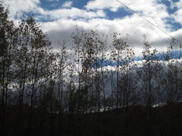 Bare trees and sky