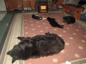 The pets loved the heater
