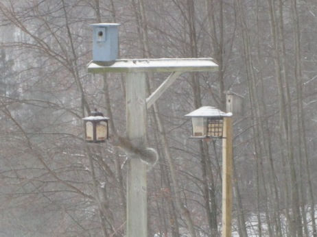 Some of my birdfeeders...and a squirrel!