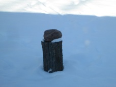 The mineral block for the deer on a log.