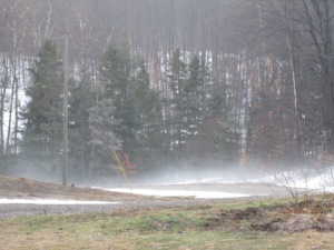 Fog slithering across the driveway