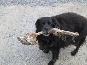 """I found us a bone for Passover!"""