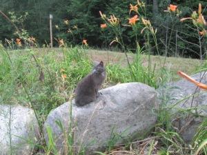 Annie sitting on the big rocks, July 2015