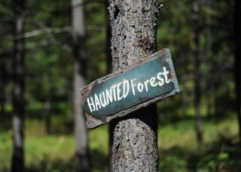 Haunted Forest2