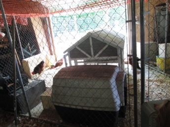 The coop and dog house divides the sections. Chickens will sleep in the coop and the ducks in the dog house.