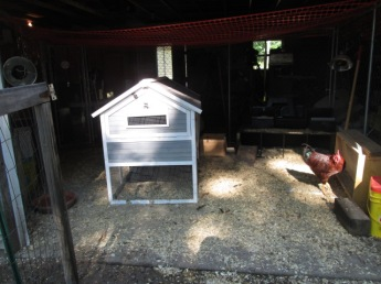 Ducks will go to the left of the coop and the chickens to the right.