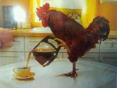 Chicken Morning
