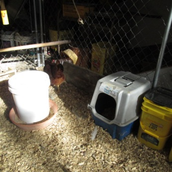 This is the new chicken feeder as well as the kitty litter nesting box